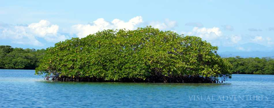 Bocas Del Toro Panama Galer 237 A Fauna Y Flora